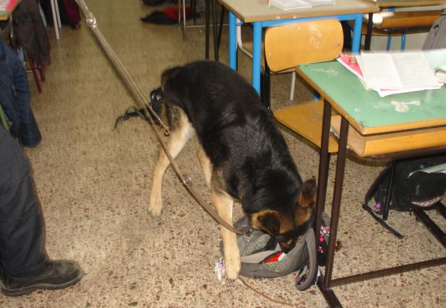 A scuola con 56 dosi di droga, studente beccato dal cane antidroga